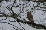 buse variable-2